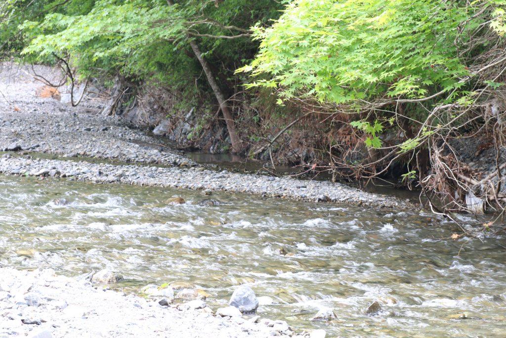浦山川の上流