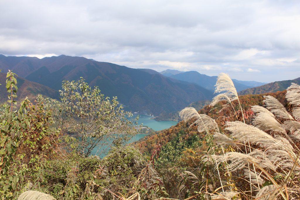 小河内ダムと紅葉とススキ(2020年11月)