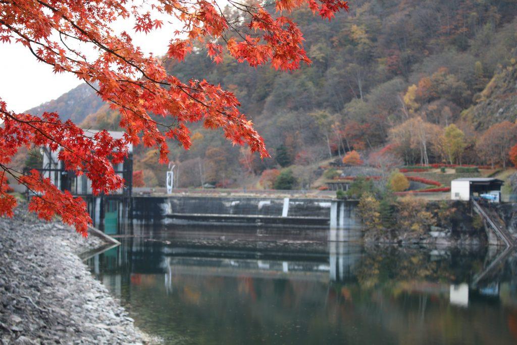 広瀬ダムの洪水吐とモミジ(2020年11月)