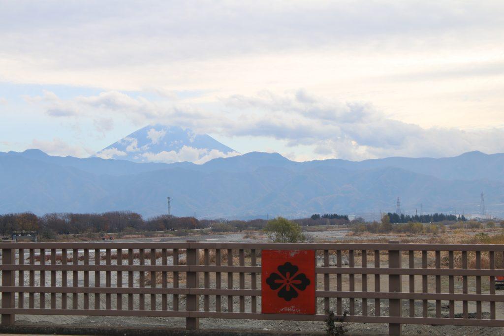 富士山と武田花菱(2020年11月)