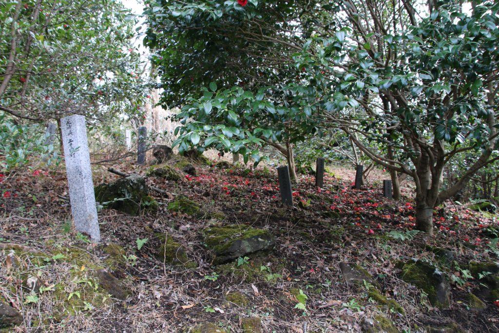 小室山公園椿園(2021年3月)