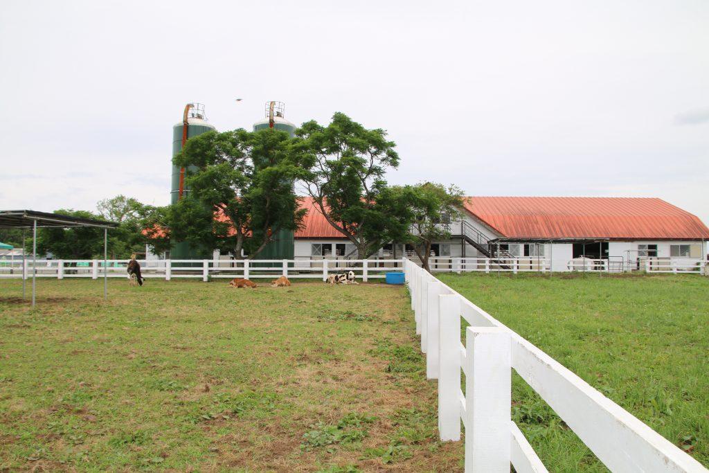 マザー牧場の牛舎(2021年6月)
